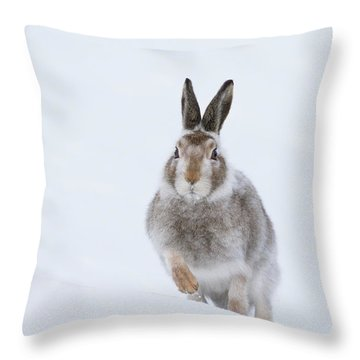 Throw Pillow featuring the photograph Mountain Hare - Scotland by Karen Van Der Zijden