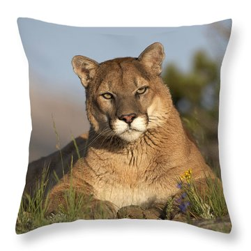 Mountain Lion Portrait North America Throw Pillow