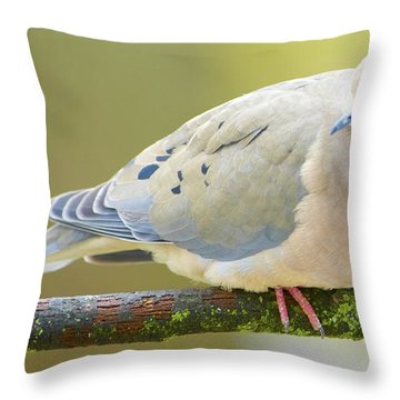 Mourning Dove On Tree Branch Throw Pillow