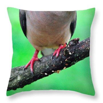Mourning Dove Throw Pillow by Thomas R Fletcher