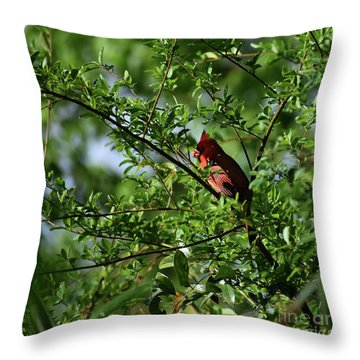 Throw Pillow featuring the photograph Mr Red by Skip Willits