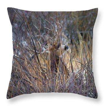 Mule Deer Throw Pillow