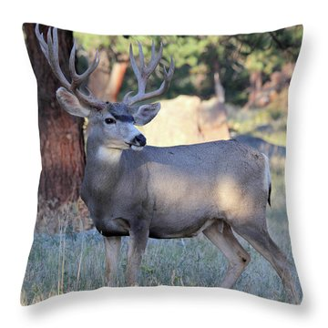 Throw Pillow featuring the photograph Muley Buck by Shane Bechler