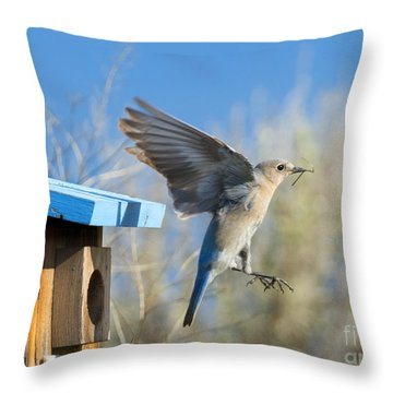 Nest Builder Throw Pillow by Mike Dawson