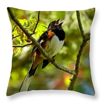 Towhee In Song Throw Pillow by Dianne Cowen