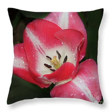 Throw Pillow featuring the photograph Nice Tulip by Elvira Ladocki