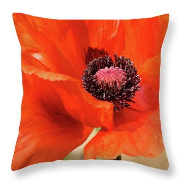 On The Fringe Throw Pillow