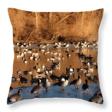Open Water Throw Pillow by Edward Peterson