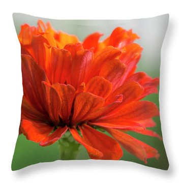 Red Zinnia  Throw Pillow by Jim Hughes
