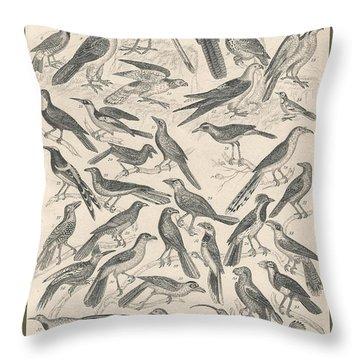 Ornithology Throw Pillow