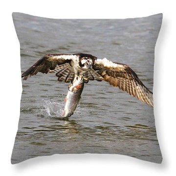 Osprey Throw Pillow by Paul Marto