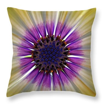 Osteospermum The Cape Daisy Throw Pillow by Shirley Mitchell
