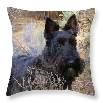 Throw Pillow featuring the photograph Always Alert by Michele Penner
