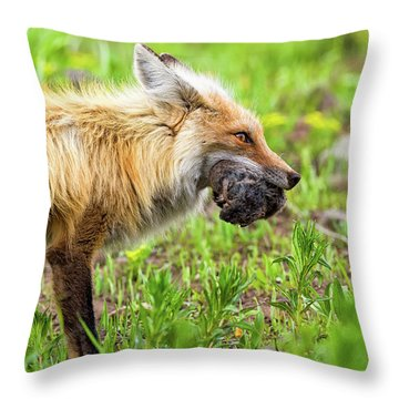 Out Foxed  Throw Pillow by Scott Warner