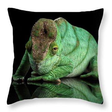 Parson Chameleon, Calumma Parsoni Orange Eye On Black Throw Pillow by Sergey Taran