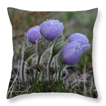 Pasque Flowers  Throw Pillow