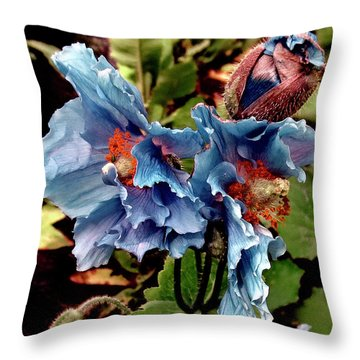 Pavot Bleu // Meconopsis Betonicifolia 2 // Blue Poppy Throw Pillow
