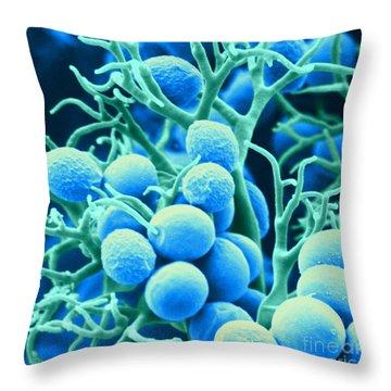 Peronospora Parasitica Throw Pillow by Biophoto Associates and Photo Researchers