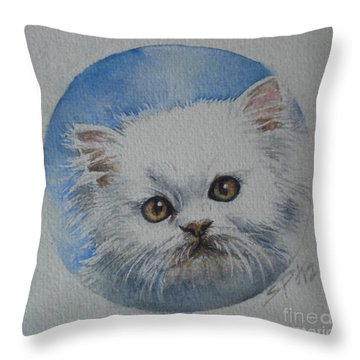 Persian Kitten Throw Pillow by Sandra Phryce-Jones