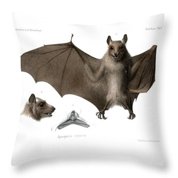 Throw Pillow featuring the drawing Peters's Epauletted Fruit Bat by Hugo Troschel