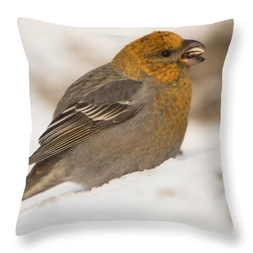 Pine Grosbeak Pinicola Enucleator Throw Pillow by Gabor Pozsgai