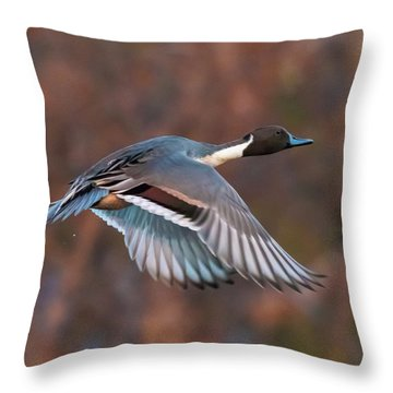 Throw Pillow featuring the photograph Pintail  by Kelly Marquardt