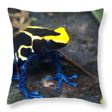 Poison Dart Frog Throw Pillow