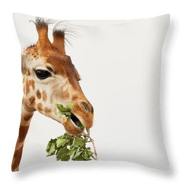 Portrait Of A Rothschild Giraffe  Throw Pillow