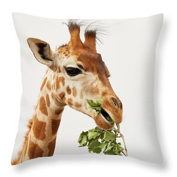 Throw Pillow featuring the photograph Portrait Of A Rothschild Giraffe  by Nick Biemans