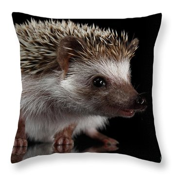 Prickly Hedgehog Isolated On Black Background Throw Pillow by Sergey Taran