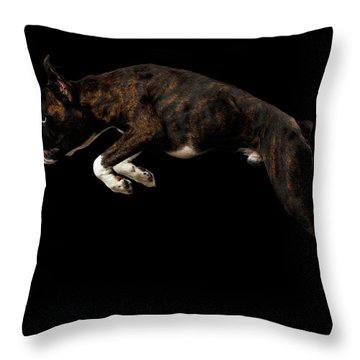 Purebred Boxer Dog Isolated On Black Background Throw Pillow