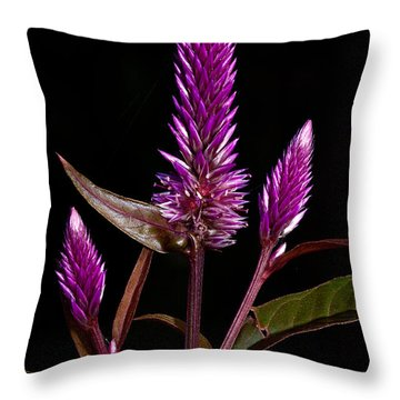 Purple Throw Pillow by Christopher Holmes