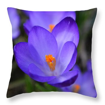 Purple Crocuses - 2015 Throw Pillow