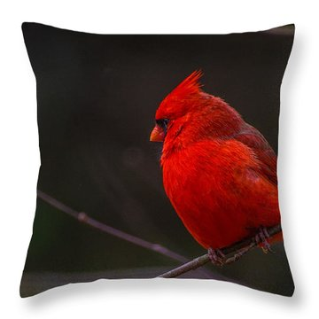 Quality Quiet Time  Throw Pillow