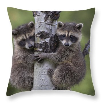 Throw Pillow featuring the photograph Raccoon Two Babies Climbing Tree North by Tim Fitzharris