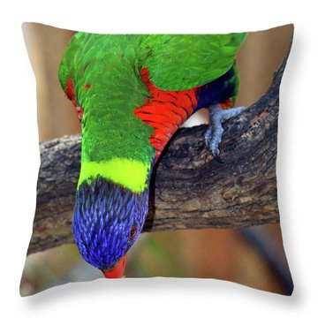 Rainbow Lorikeet Throw Pillow by Inspirational Photo Creations Audrey Woods