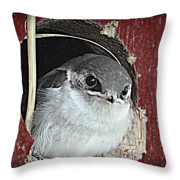 Red Barn Birdie Throw Pillow