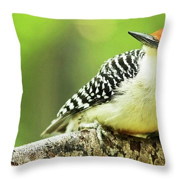 Red Bellied Woodpecker, Male, Animal Portrait Throw Pillow