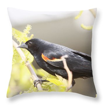 Red Wing Blackbird Throw Pillow