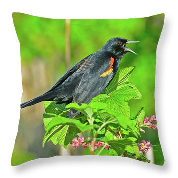 Red-winged Blackbird Throw Pillow by Jack Moskovita