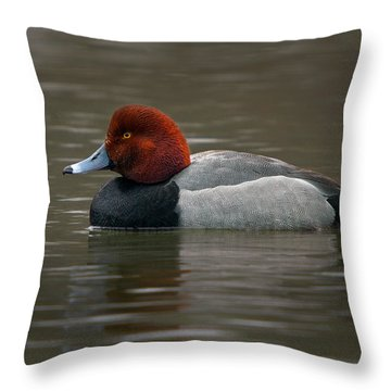 Redhead Duck Throw Pillow by Timothy McIntyre