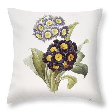 Redoute: Auricula, 1833 Throw Pillow by Granger