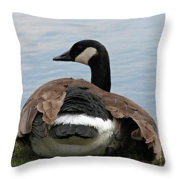Resting Throw Pillow by Rachel Roushey