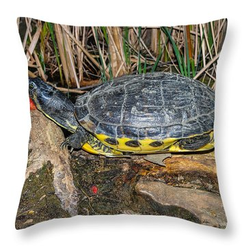 Resting Throw Pillow by Robert Hebert