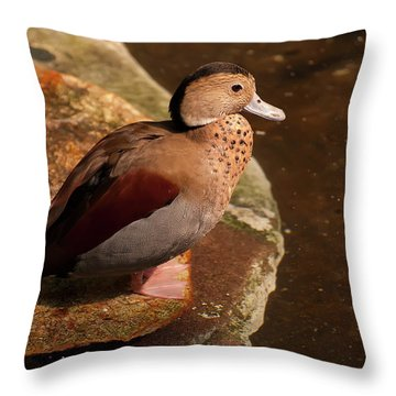 Throw Pillow featuring the photograph Ringed Teal On A Rock by Chris Flees