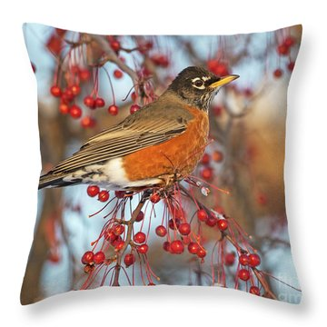 Throw Pillow featuring the photograph Robin.. by Nina Stavlund