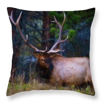 Rocky Mountain Elk Throw Pillow