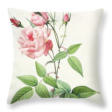 Rosa Indica Vulgaris Throw Pillow by Pierre Joseph Redoute