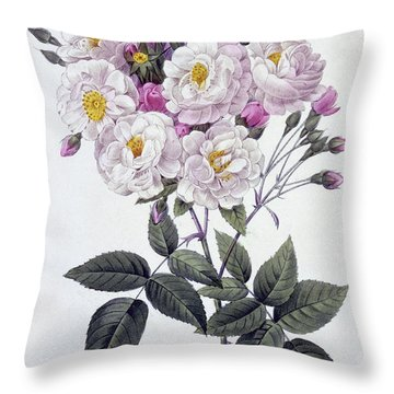 Rosa Noisettiana Throw Pillow