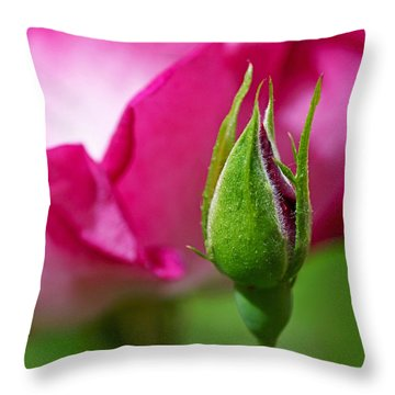 Throw Pillow featuring the photograph Budding Rose by Rona Black